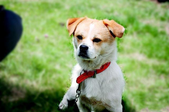 你知道狗狗的报复心理吗